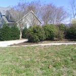 Line of shrubs needing care